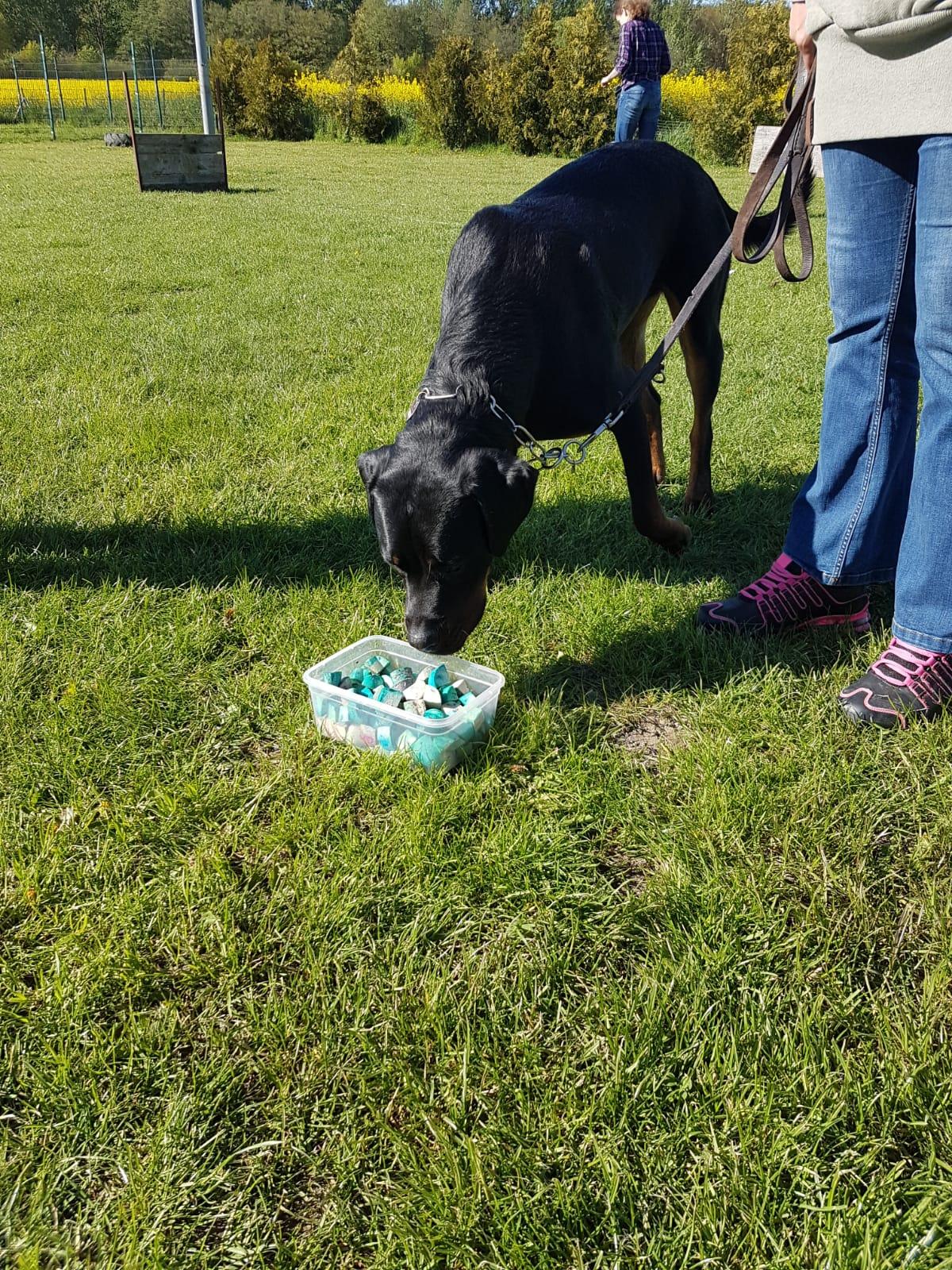 Giftkoeder erkennen lernen,  Training in der Hundewelt Duwensee