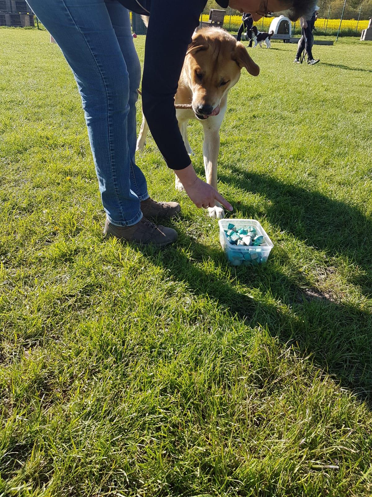 Dank des Giftkoedertrainings in der Hundewelt Duwensee ueberleben viele Hunde diesen Attacken