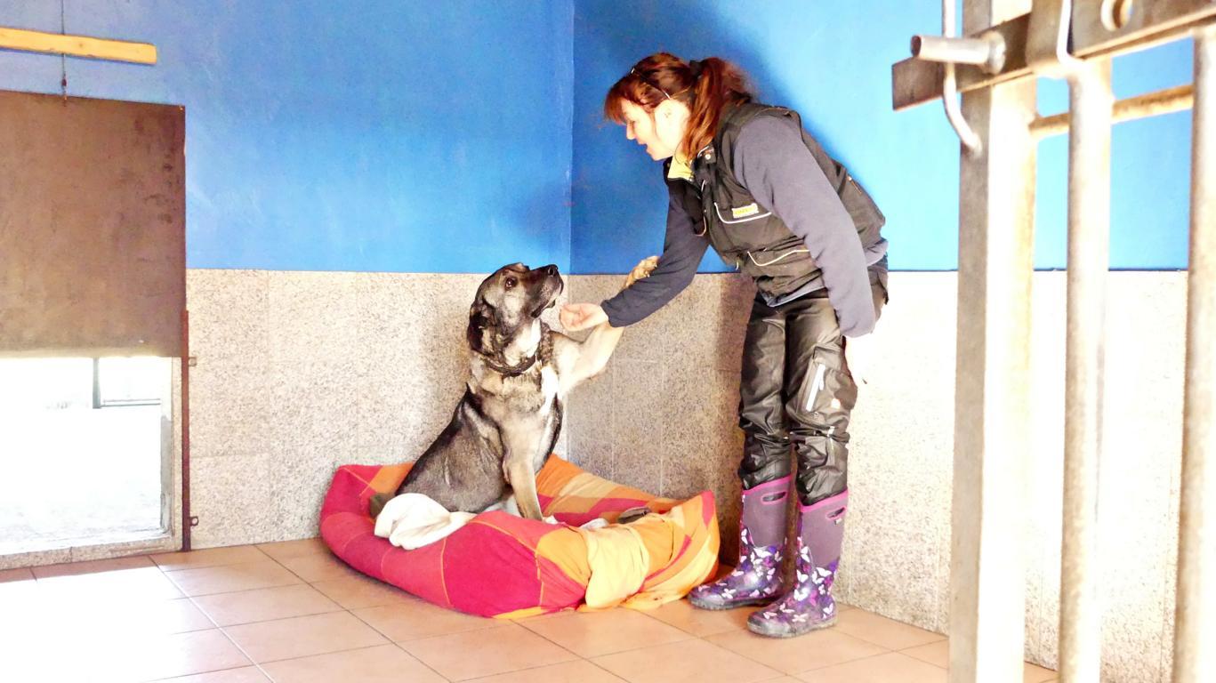 Christine Duwensee in der Hundepension